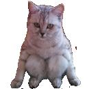 :sitting_cat:
